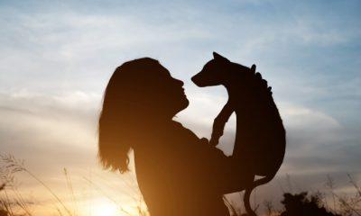 mundo espiritual dos animais