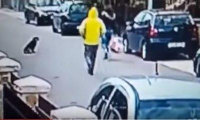 cão avança em assaltante