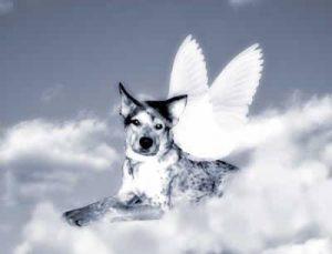 animais plano espiritual