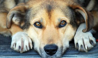 eutanásia em animais