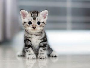 gato e espírito