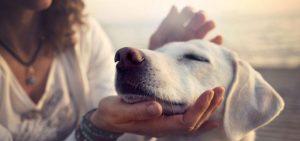 tratamento espiritual em animais