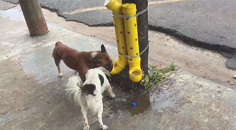 animais de rua