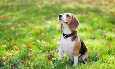 cachorro vendo espíritos