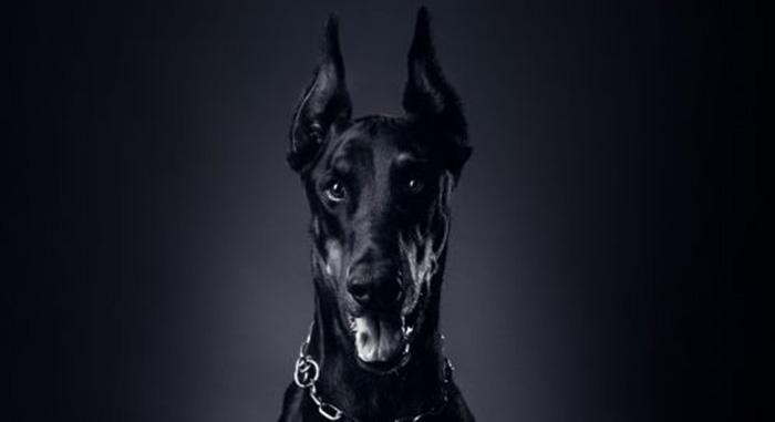 chico xavier cachorro obsessor